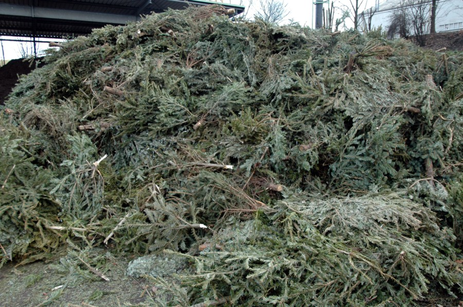 Das Schicksal eines Weihnachtsbaumes im Kreis Unna: die eingesammelten Bäume werden im Kompostwerk der GWA geschreddert und zu gütegeprüftem Kompost verarbeitet. (Foto: GWA Kreis Unna)