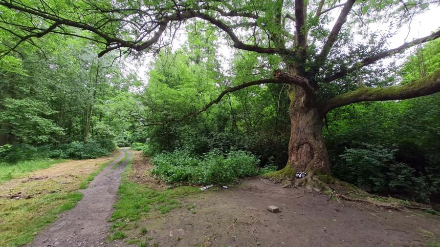 Unter diesem Baum an der Emscher südlich des Hofes Dudenroth treffen sich seit Generationen Holzwickeder Jugendliche. (Foto: P. Gräber - Emscherblog)