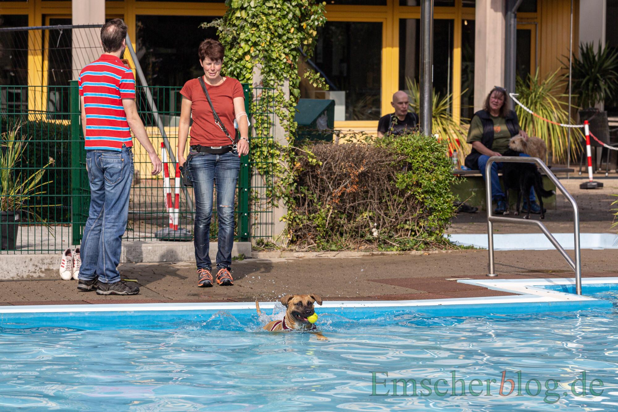 Knapp 500 zahlende Besucher beim Hundeschwimmen zum Saisonabschluss im Freibad Schöne Flöte