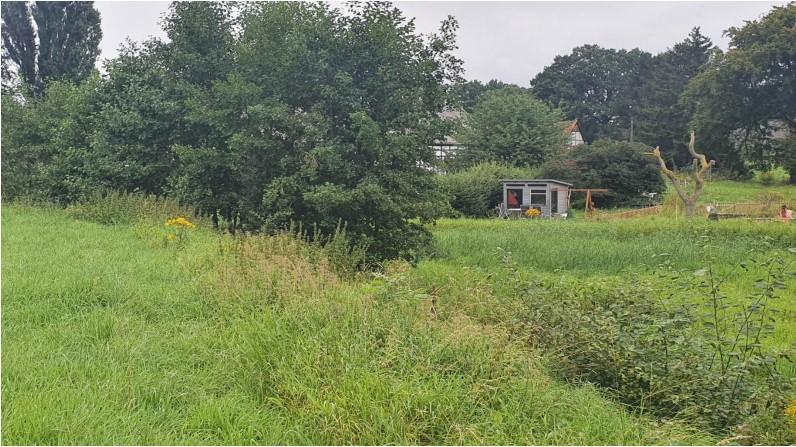 Die Auenlandschaft (Foto) am Krummen Weg, eigentlich ein Regenrückhaltebecken, soll von Bewuchs befreit und erweitert werden. (Foto: Gemeinde Holzwickede)